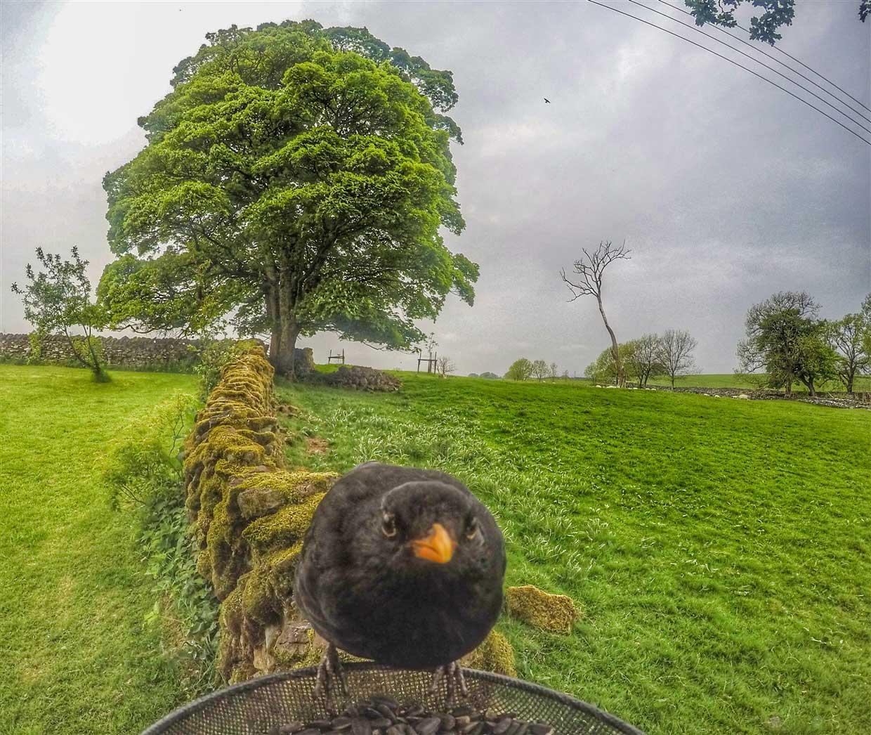 birds-2-gopro Gardencam Highlights – A Summer in Cumbria