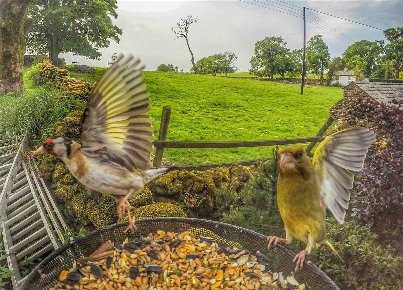 birds-3-gopro Gardencam Highlights – A Summer in Cumbria