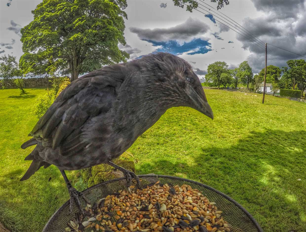 Gardencam Highlights – A Summer in Cumbria