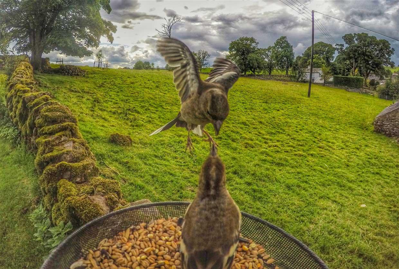 birds-5-gopro Gardencam Highlights – A Summer in Cumbria