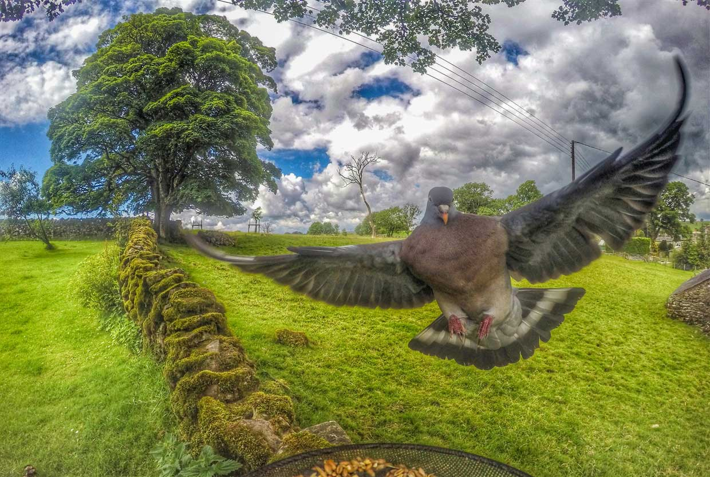 Gardencam Highlights – A Summer in Cumbria