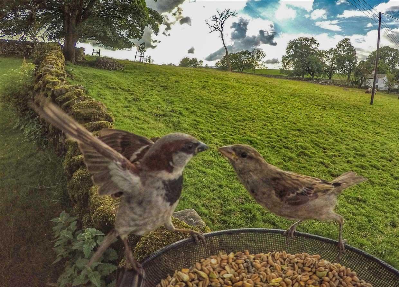 birds-7-gopro Gardencam Highlights – A Summer in Cumbria