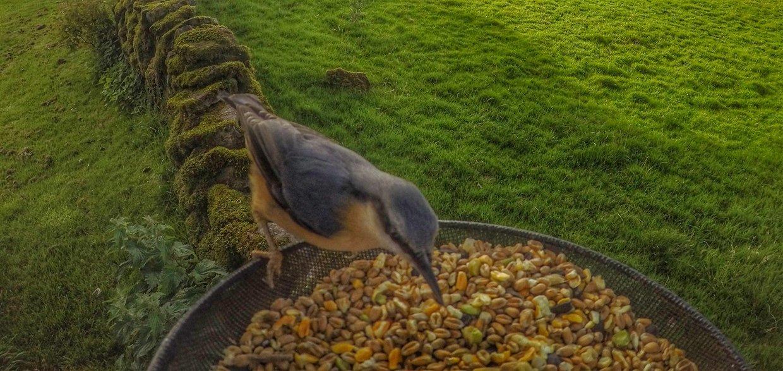 birds-8-gopro Gardencam Highlights – A Summer in Cumbria