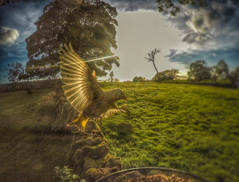birds-9-gopro Gardencam Highlights – A Summer in Cumbria