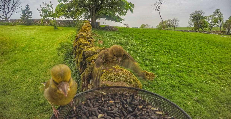 birds-gopro Gardencam Highlights – A Summer in Cumbria