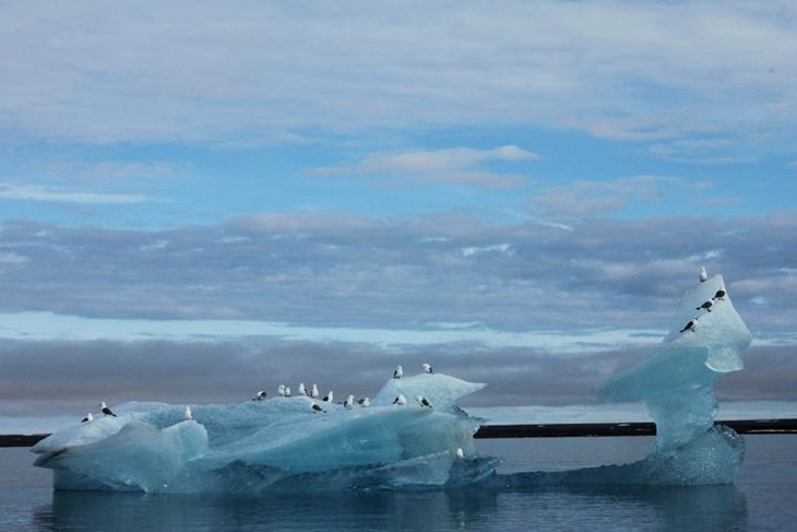 birds on iceberg Cutting Through The Arctic   Snapping The Spectacle