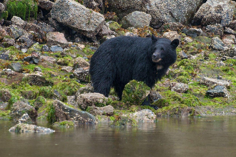 blog-3-photo-4 Canada – Bear watching in Tofino