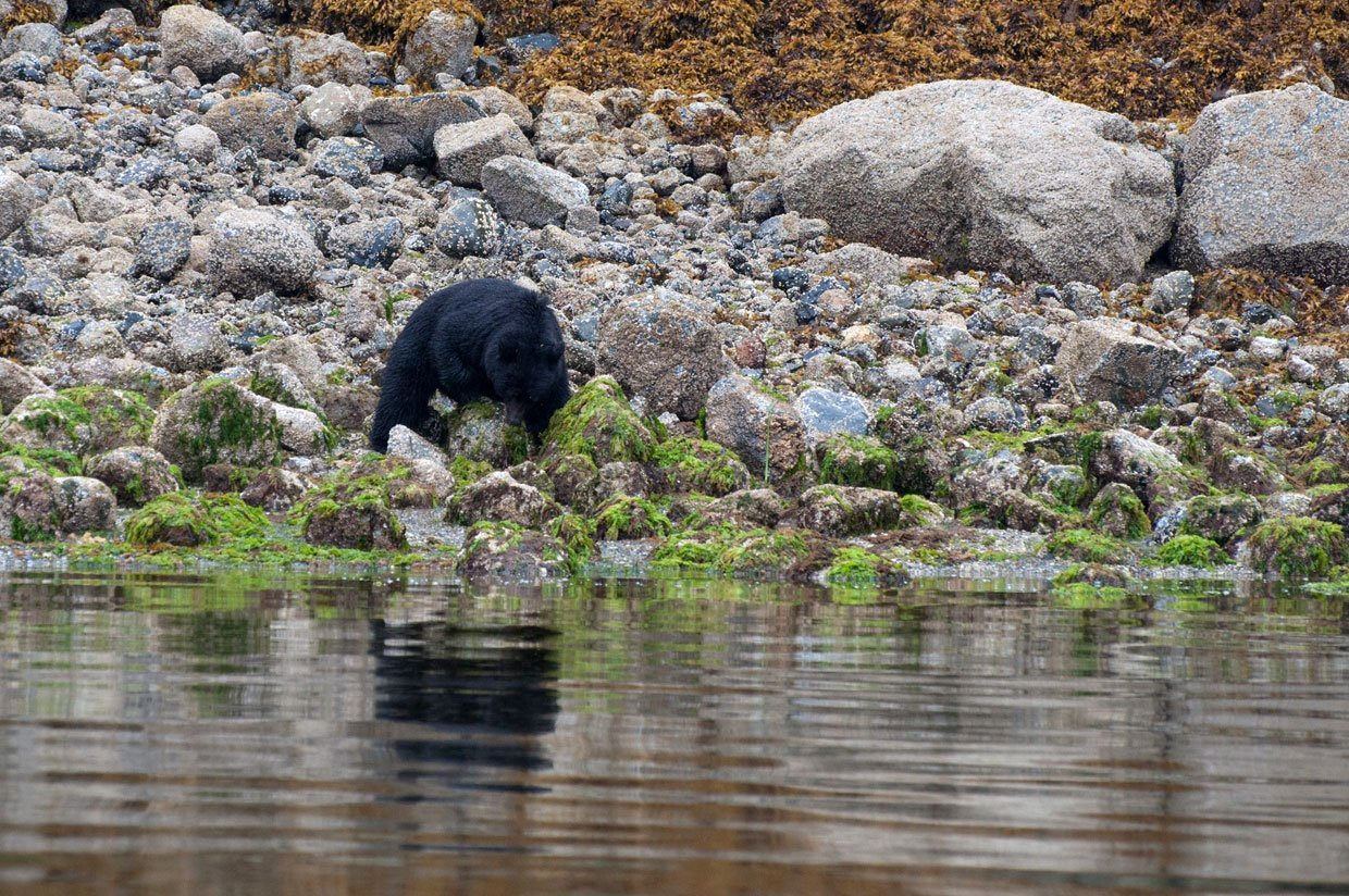 blog-3-photo-6 Canada – Bear watching in Tofino