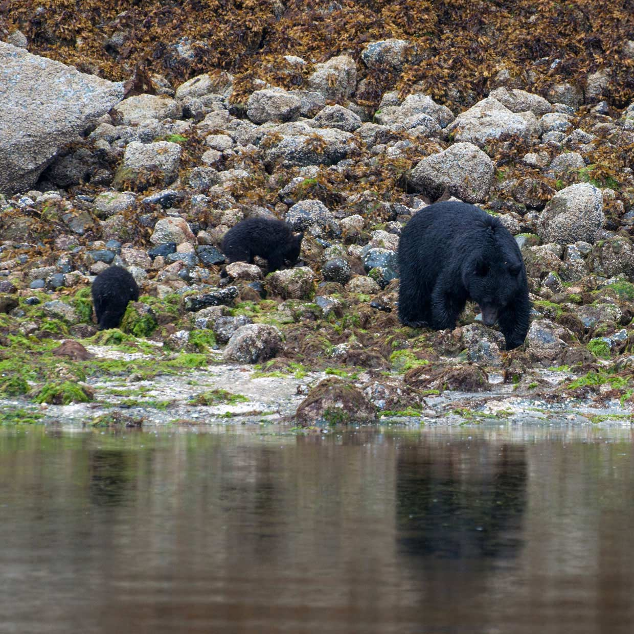 blog-3-photo-7 Canada – Bear watching in Tofino