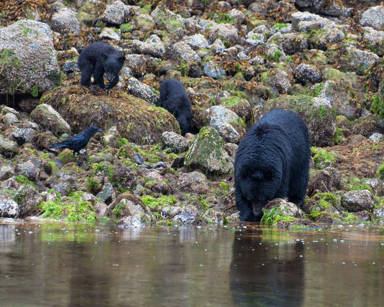 blog-3-photo-8 Canada – Bear watching in Tofino
