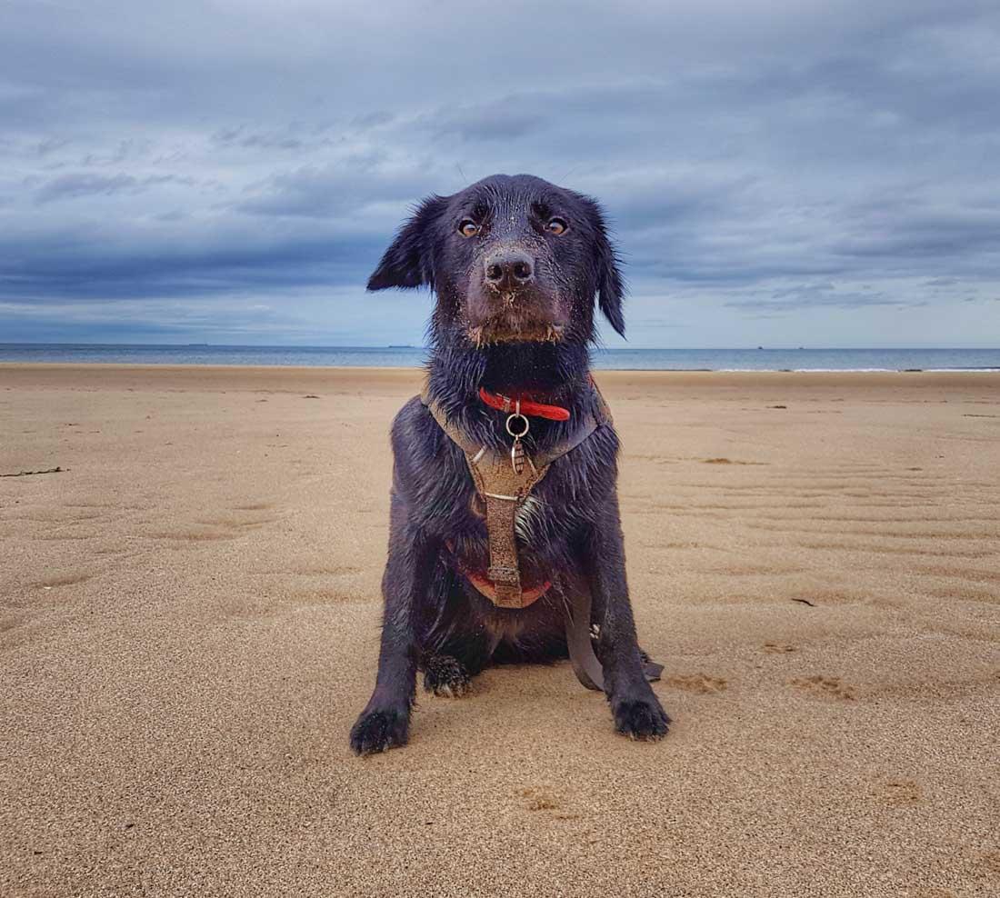 crimdon-beach-7 Walks Along Crimdon Beach, Durham