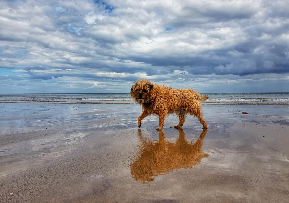 small dog on beach