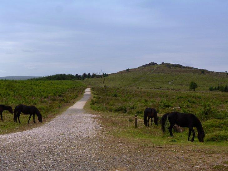 dartmoor2-0161 Dartmoor – Treading Tors