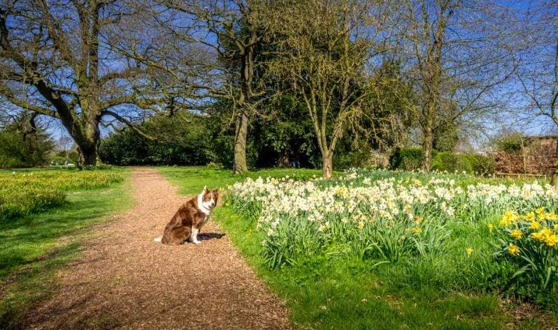 dog walks in the gardens