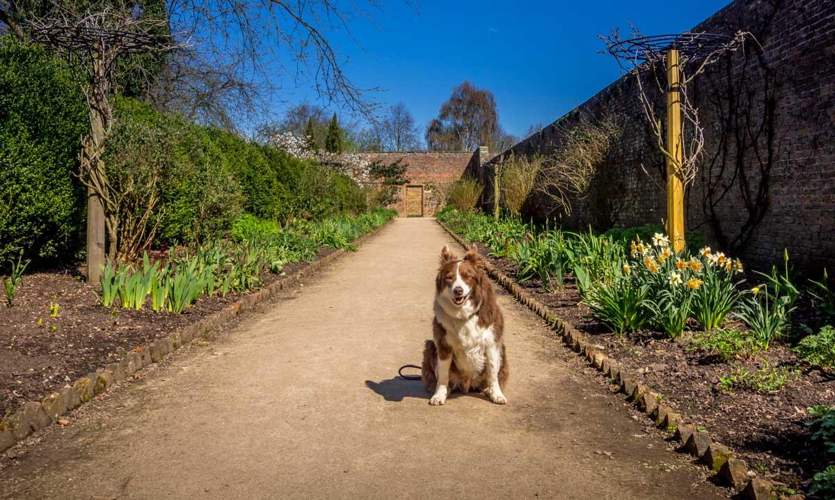 dog-beningbrough-7 A Doggy Day at Beningbrough Hall and Gardens
