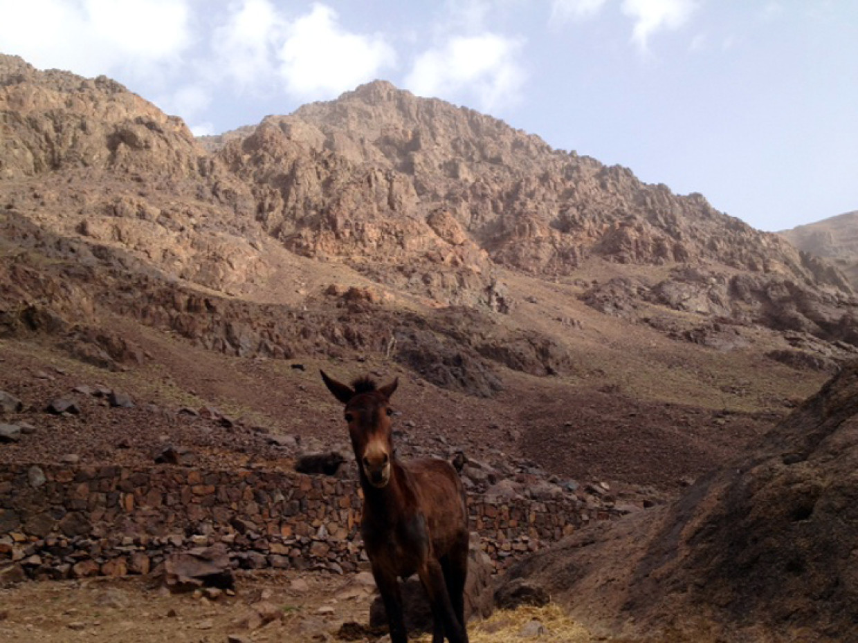 Good afternoon :) Mountain mule taking a well earned rest with us :D #ExodusTrek