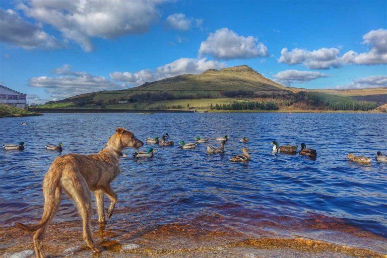 Dove Stone Reservoir – A Saddleworth Gem
