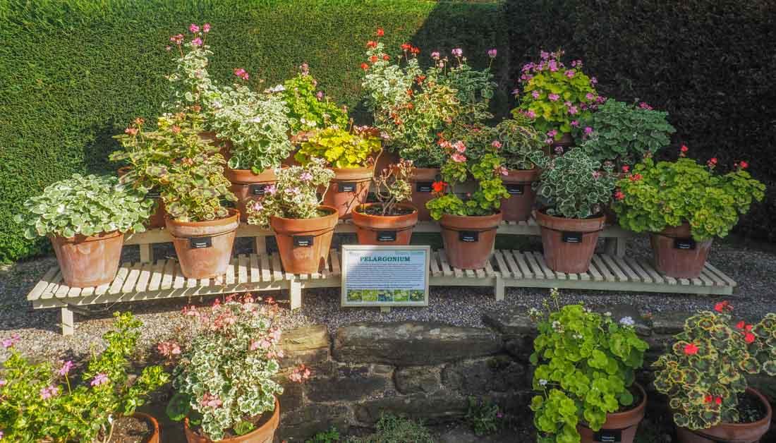 durham-botanical-gardens-2 Durham - The Botanic Garden