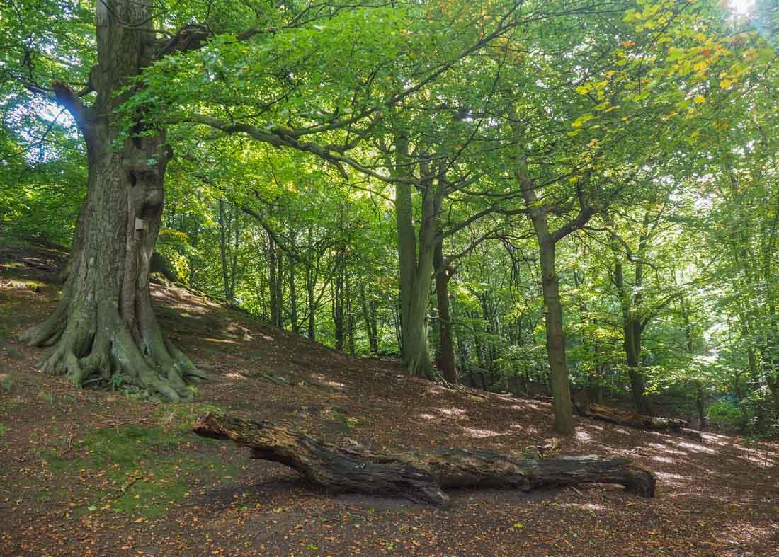 durham-botanical-gardens-9 Durham - The Botanic Garden
