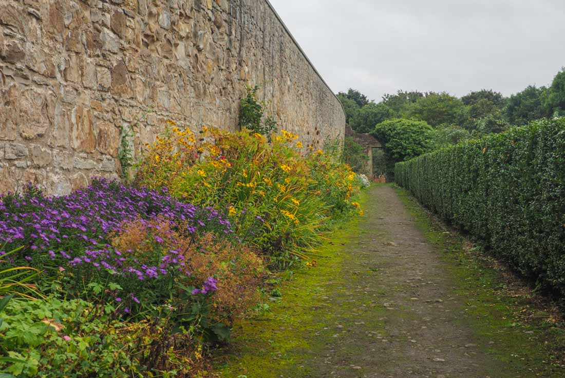 flowers against the old walls