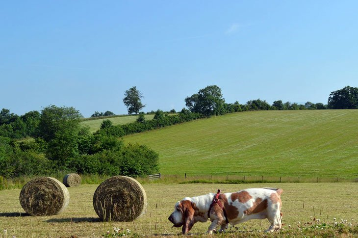 A Sunny Morning In July In The Eden Valley
