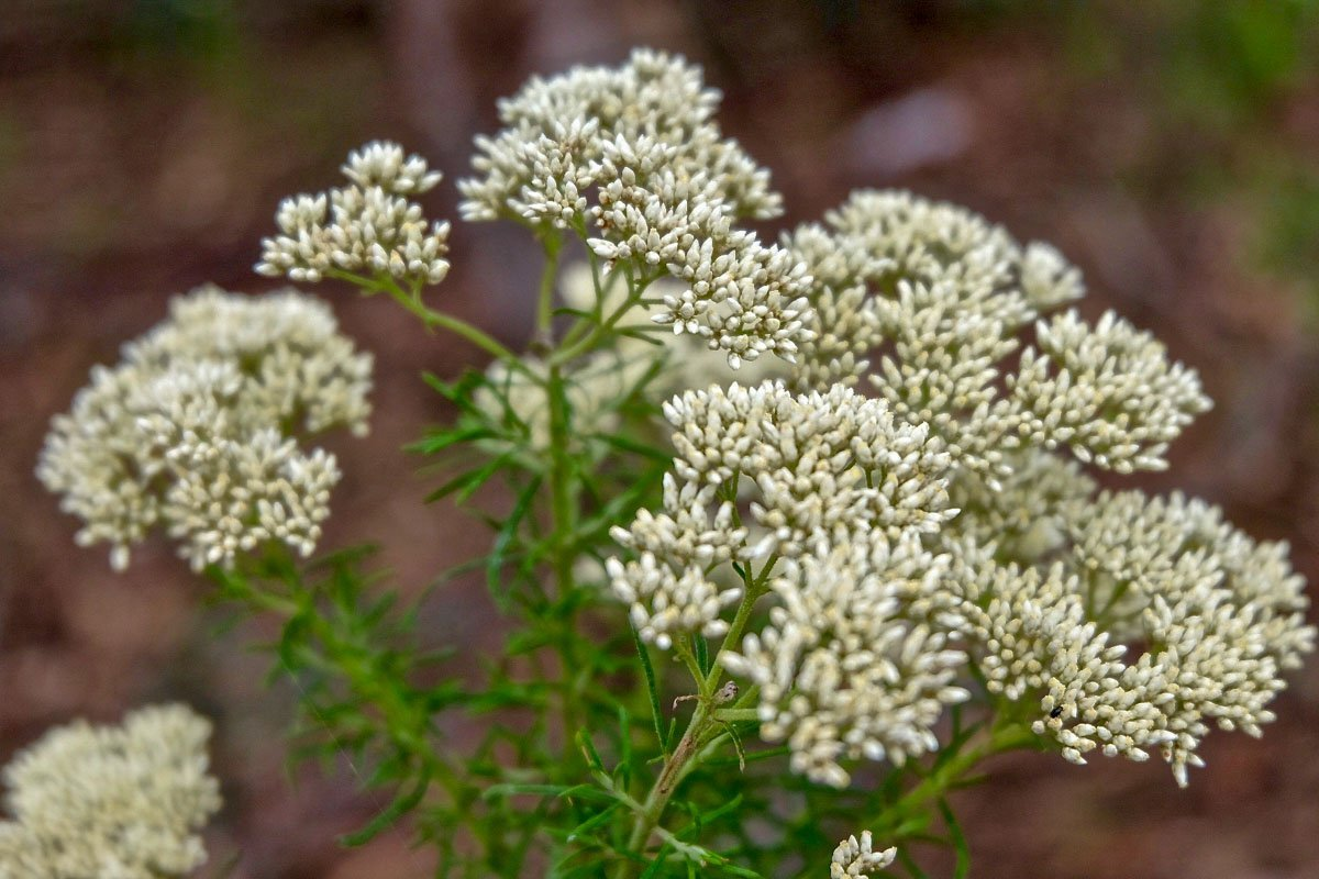 flowers-australia-7 Summer Wildflowers of Bangadilly, Australia