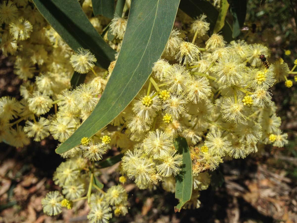 flowers-australia-8 Summer Wildflowers of Bangadilly, Australia