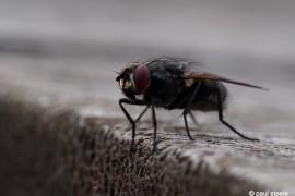 fly1- fly