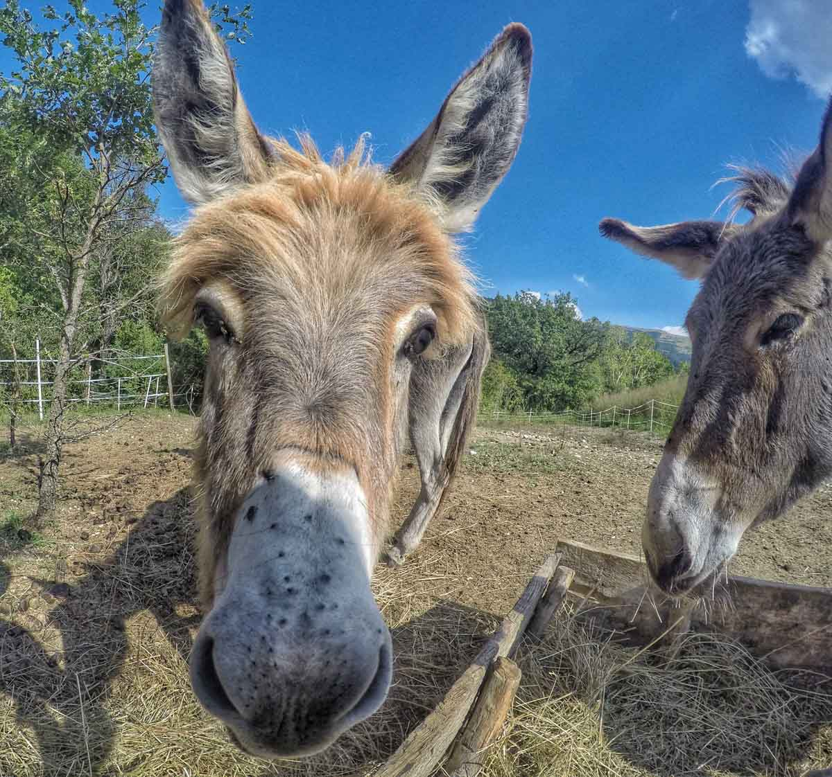 More GoPro Animals On My Travels and Walks
