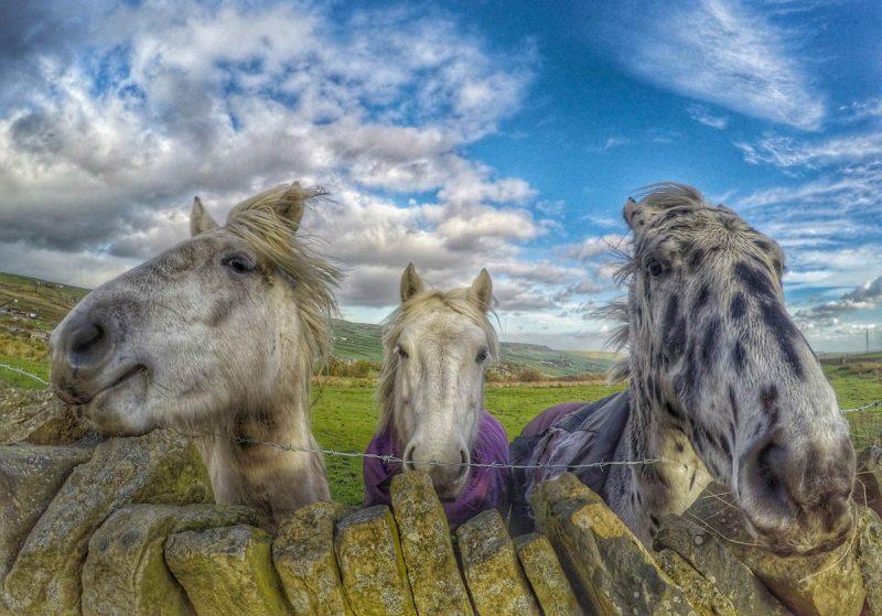 three fun horses
