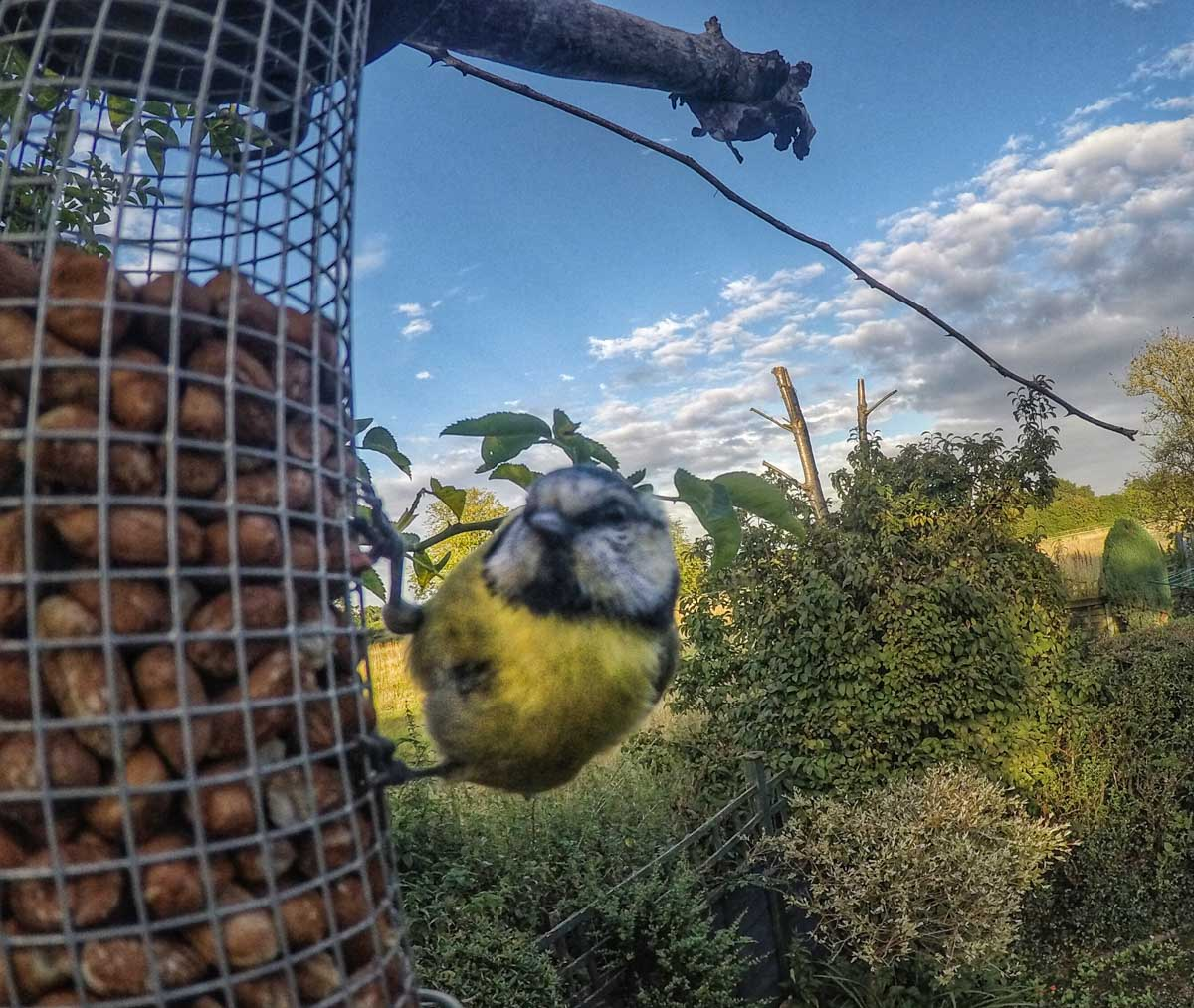 fun-animals-9 More GoPro Animals On My Travels and Walks