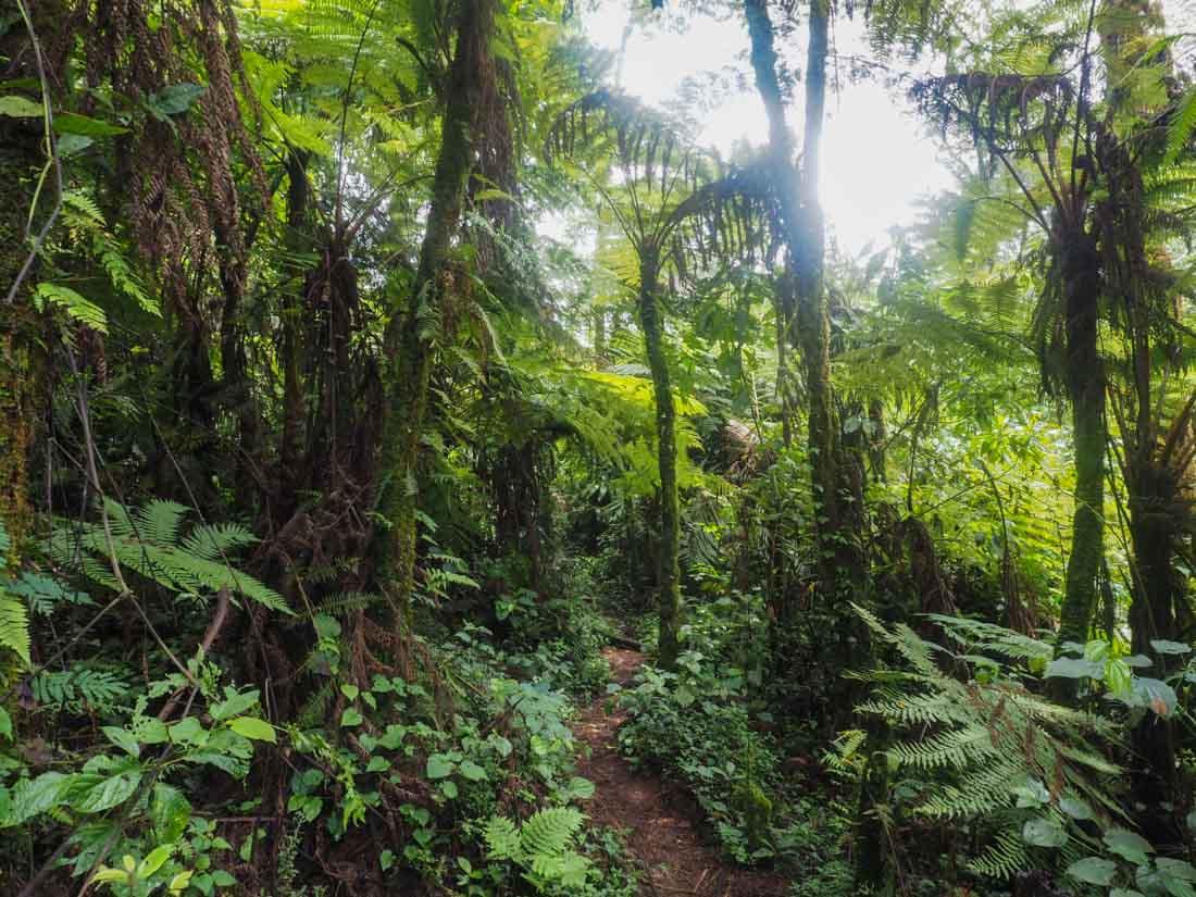 gorillas-uganda-trek-1-18 Gorilla Tracking Uganda - The Mubare Family