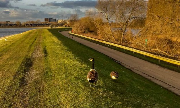 A Walk Through Walthamstow Wetlands