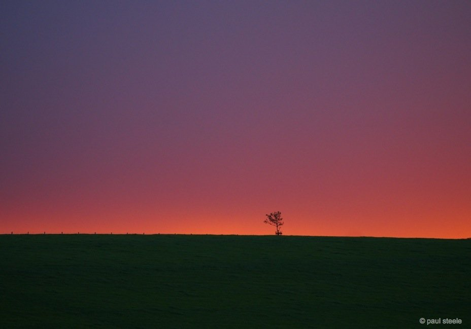 The lonely little tree at dawn