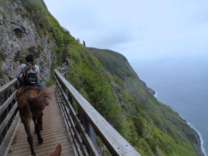 maui-6-223 Molokai – A Mule Down the Cliffs To The Kalaupapa Story