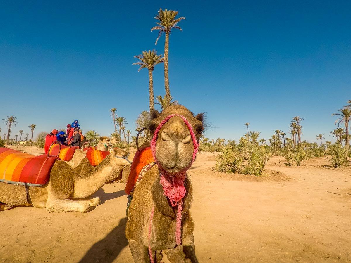 morocco-13 Marrakech by Balloon and Camel