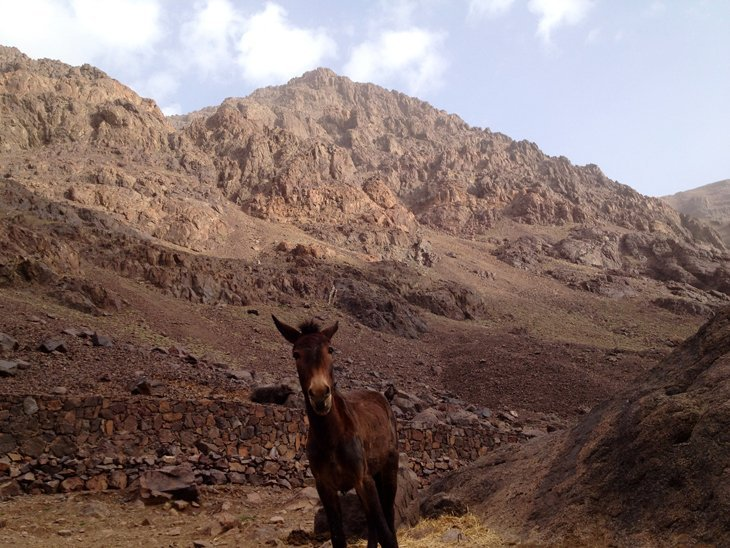 mule Trekking To The Top Of North Africa   Mt Toubkal