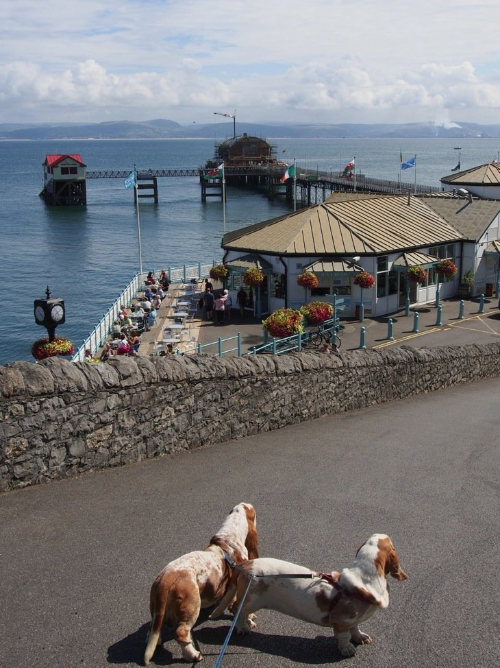 walking down to the mumbles with the dogs