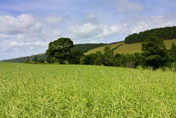 Beautiful Britain - Pastures Green 7