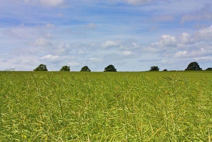 Beautiful Britain - Pastures Green 9