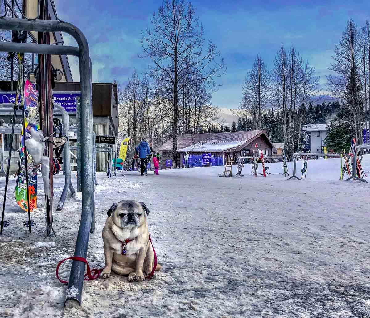 cold dog in Alaska