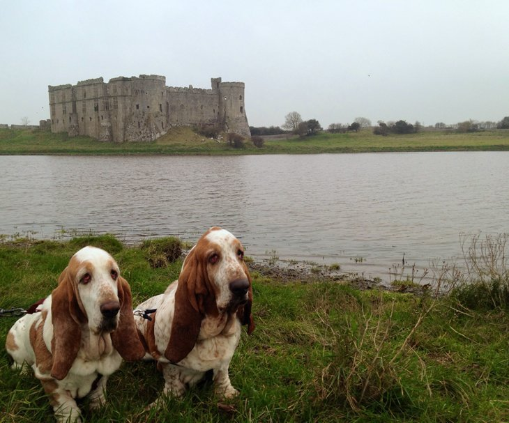 photo17 The Basset Hounds – My Faithful Scoundrels