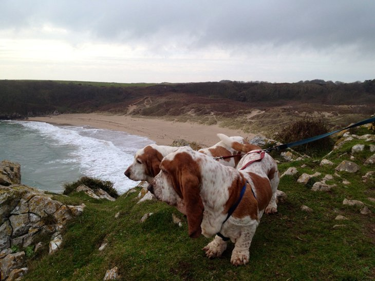photo18 The Basset Hounds – My Faithful Scoundrels