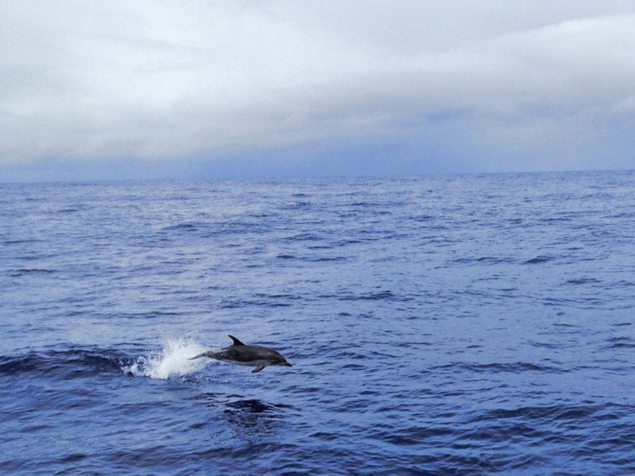 The Azores – Dolphins And Whales Galore With No Walls
