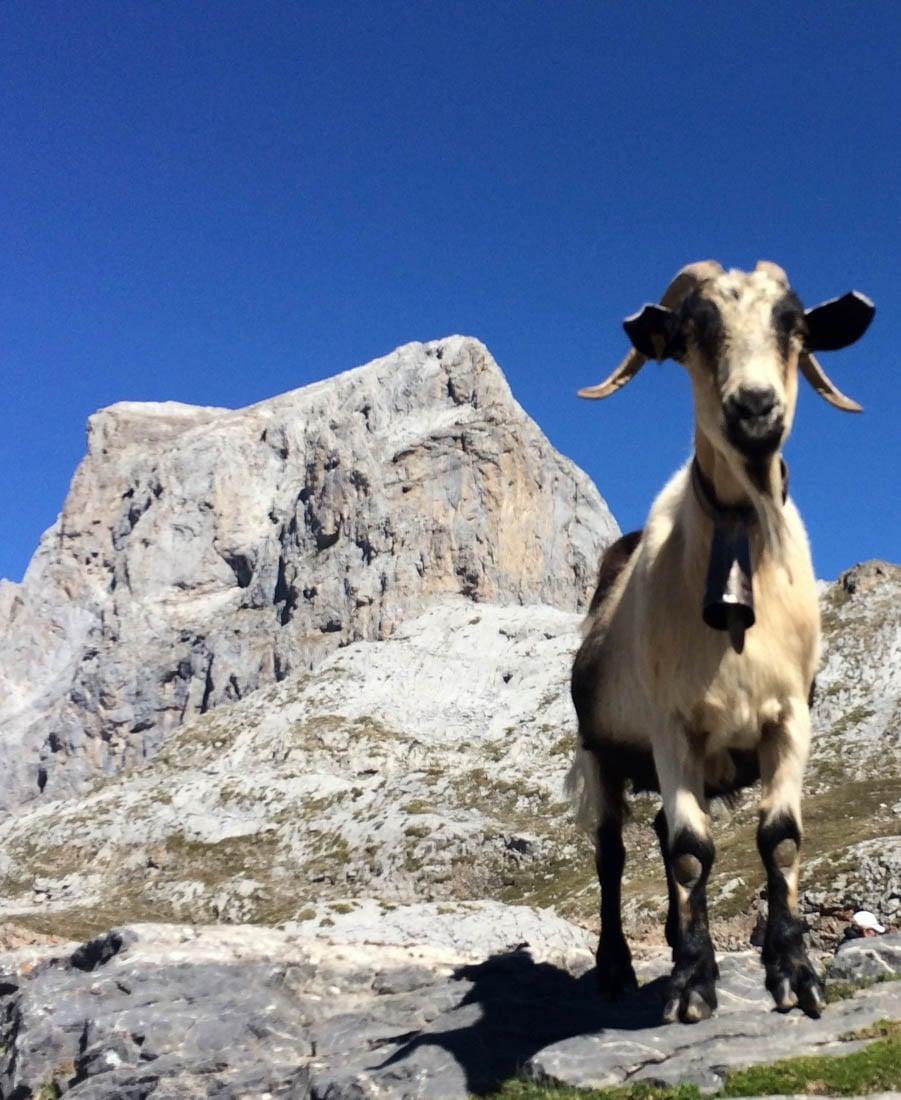 picos-3 Hiking in the Picos de Europa