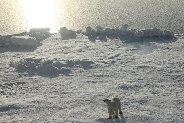 arctic sun and polar bear
