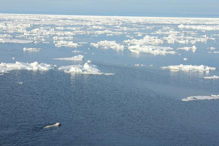 the vast arctic ocean