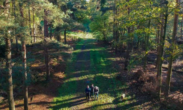 An Autumn Walk Through Red House Wood, Moor Monkton (Video)