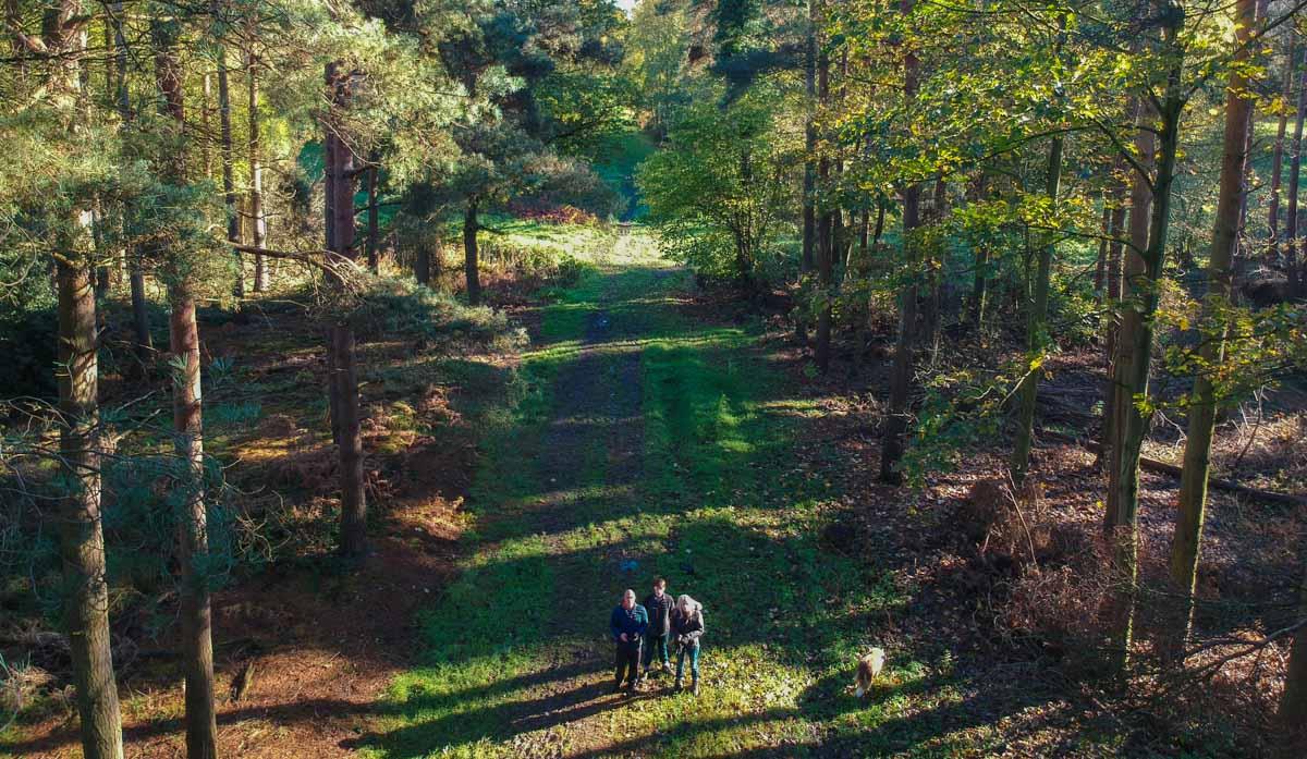 An Autumn Walk Through Red House Wood, Moor Monkton (Video) 1