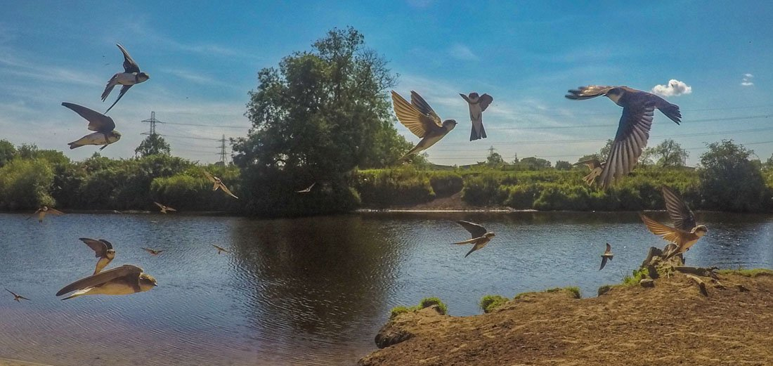 Among The Sand Martins of the River Ouse